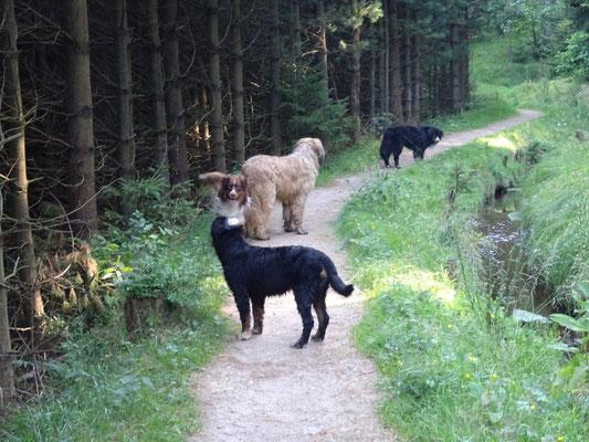 Wanderweg entlang des Grünen Grabens