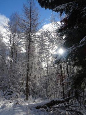 Im tief verschneiten Winderwald