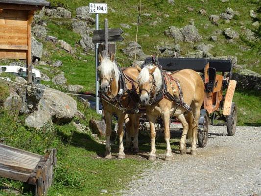 Pferdewagen bringen Gäste vom Weißbrunner See zur Fiecht Alm