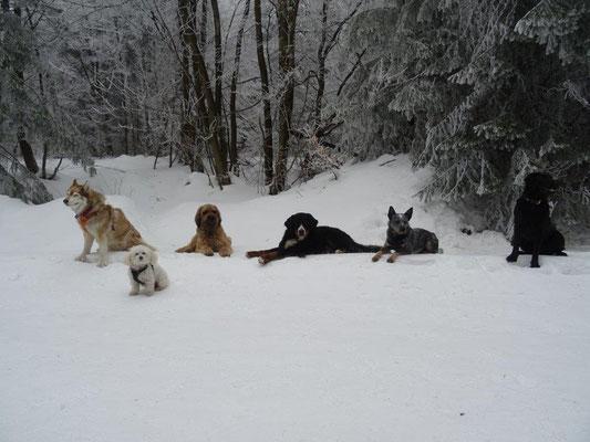 Fellnasen-Gruppenfoto :-)