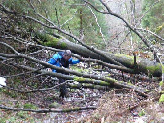 Abenteuerlicher Aufstieg am Wedelbach