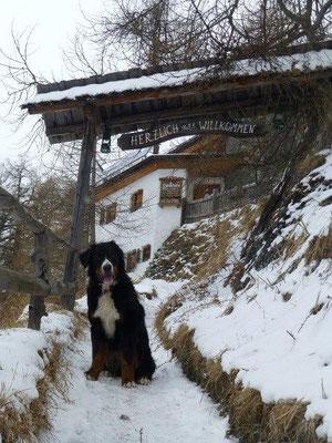 Aufstieg zur Stabanthütte