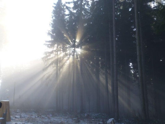 Immer wieder malten Nebel und Sonne wunderbare Bilder in den Wald