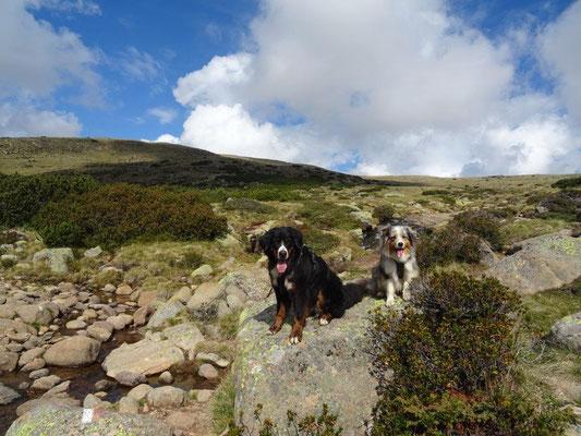Zwei Bergziegen :-)
