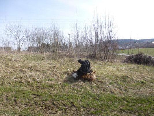 Die Wiesen um Scheibenberg boten viel Platz zum Toben