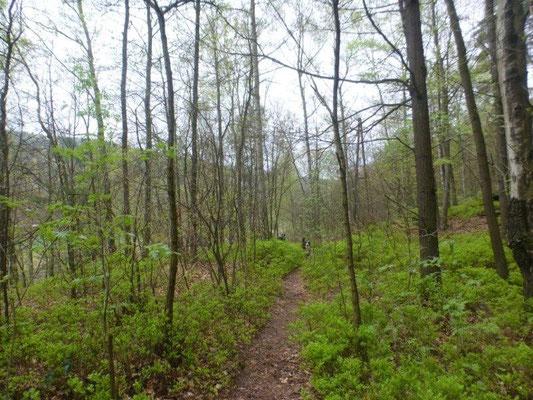 Langsam wird es grün in den Wäldern