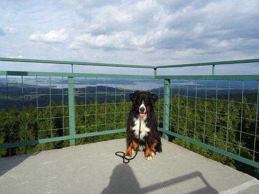 Vom Aussichtsturm Moldaublick hat man einen schönen Ausblick...