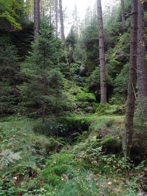 Üppiges Grün im Großen Zschand