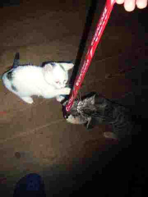 Katzenbabies auf der Alm