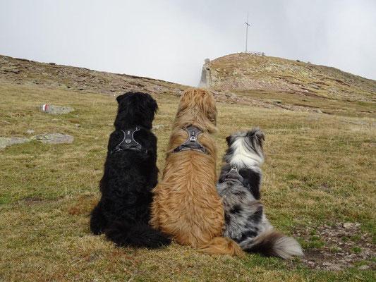 Die drei haben das Ziel schon fest im Blick :-)