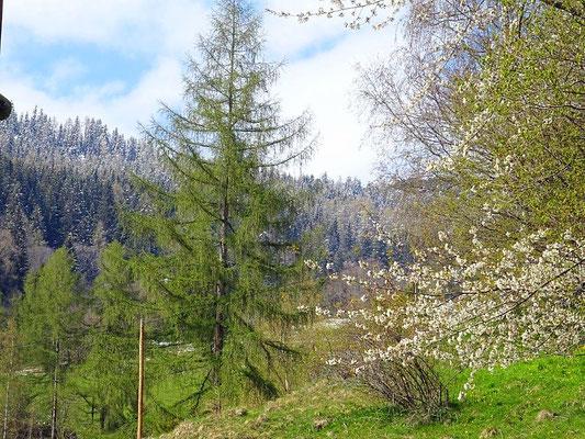 """Während unten die Bäume blühen, ist der Wald weiter oben noch """"von Puderzucker bedeckt"""""""