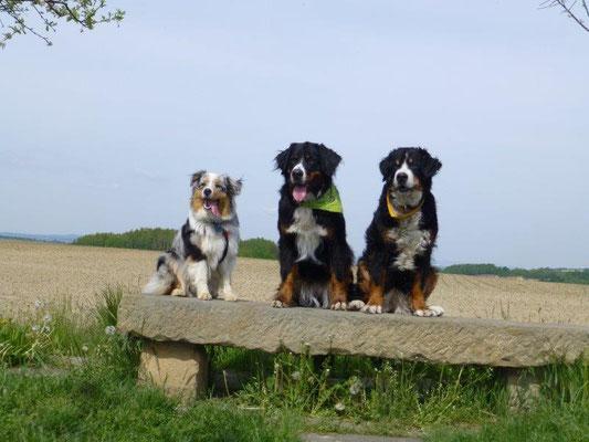 Faye, Vreni und Gusti auf der Ebenheit bei Naundorf