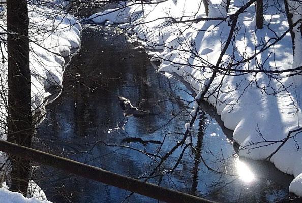 Fotografenglück - in dem Moment, als ich den Fluß fotografierte, startete ein Graureiher vom Ufer