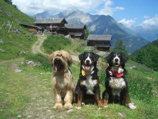 Nepomuk, Gusti und Senta vor den urigen Hütten der Arnitzalm