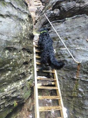 Steile Gittertreppe in der Felsengasse im Bielatal