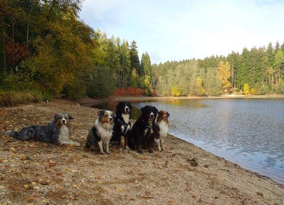 Der trockene Sommer hat seine Spuren hinterlassen - der niedrige Wasserstand der Talsperre ist eine davon....