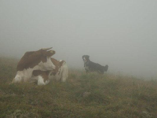 Auf dem Weg zur Bergerseehütte tauchten große Almbewohner aus dem Nebel auf :-)