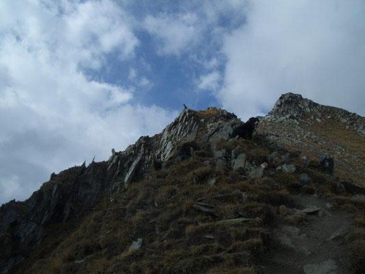 Auf dem Aufstieg zum Vorderen Sajatkopf - Senta ist nur noch als ganz kleiner Punkt zu erkennen