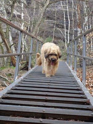 Wie überall im Elbsandsteingebirge müssen im Aufstieg zum Lilienstein einige Gittertreppen überwunden werden.