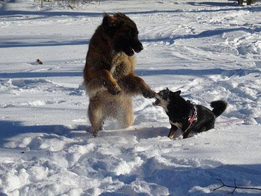 Bonny und Maiko genießen den Schnee