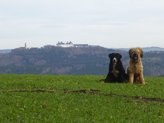 Vreni und Nepomuk, im Hintergrund die Augustusburg