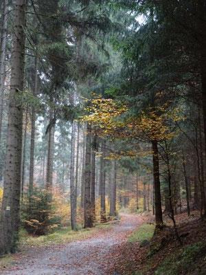 Herbst im Heringsgrund