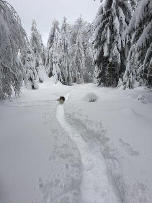 Unsere Spuren im Winterwald....
