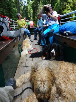 Und die Hunde nutzten die Pause auf dem Kahn :-)
