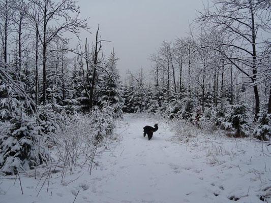 Tief verschneiter Winterwald am Hirtstein