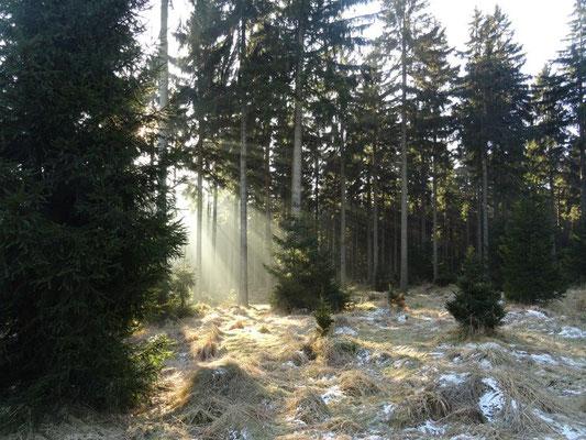 Die Sonne zauberte immer wieder wunderschöne Lichteffekte im Wald