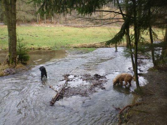 Abkühlung im Schwarzbach