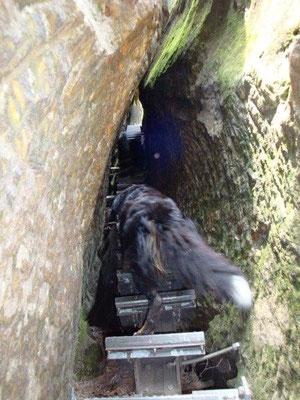 Der Steilaufstieg zum Hermannseck ist nur mit absolut treppenerfahrenen Hunden zu empfehlen