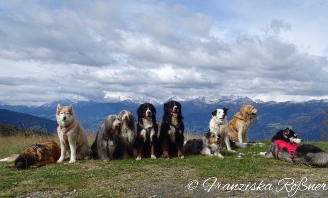 Hundegruppe am Kronplatz