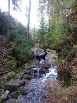 Der Weg verläuft teilweise im Bach ... oder fließt der Bach über den Weg? Das Ergebnis ist das selbe :-)