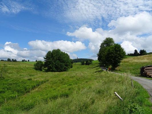 Hinter den Sommerwiesen erhebt sich der Weifberg