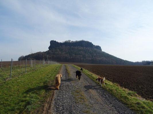 Auf dem Weg zum Lilienstein