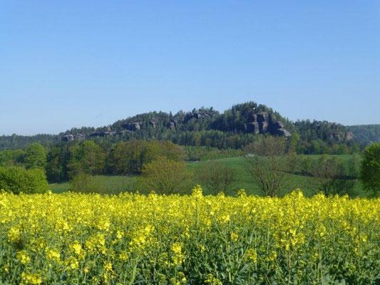 Blühendes Rapsfeld am Rauenstein