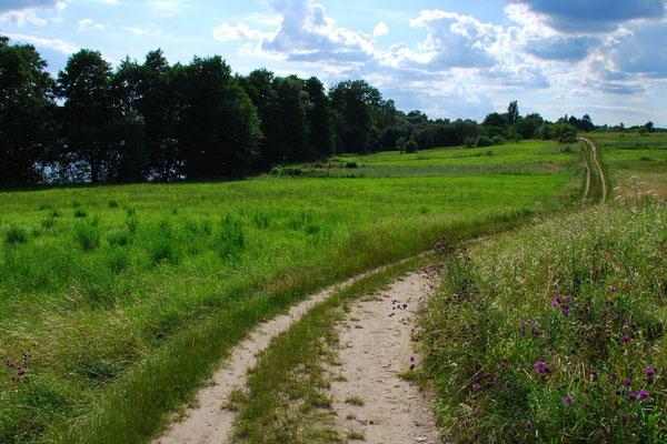 Feldweg im Nationalpark