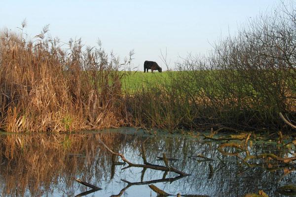 Biotop innerhalb unserer Wiesen