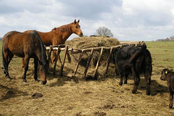 Nicht nur Rinder haben bei uns ein Zuhause