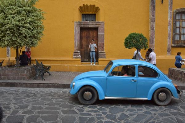 Ein blauer Käfer vor einer gelben Wand