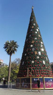 Ich vor dem Rittmeier Weihnachtsbaum in Santiago