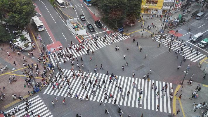 Und nochmal die Shibuya Kreuzung, diesmal war die Aussichtsplattform offen. Unter dere Woche ist deutlich weniger los. Trotzdem ist es spaßig dem Trubel von oben zuzuschauen