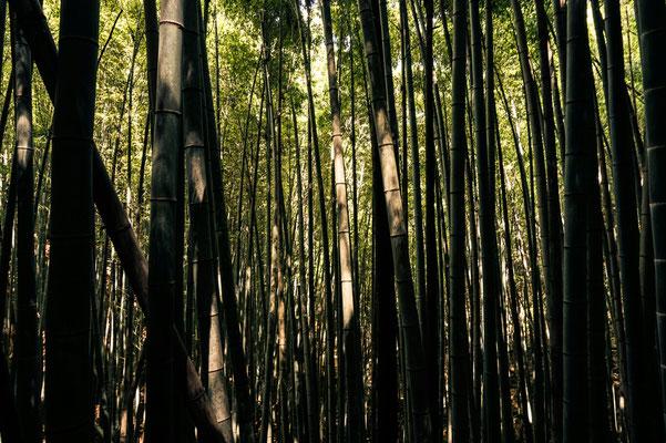 odere im Bambuswald.