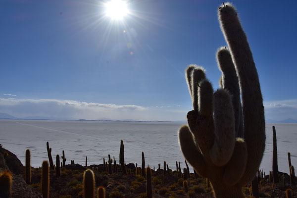 Kaktus Island mitten in der Salzpfanne