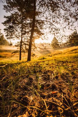 Sonnenaufgang in der Teverener Heide