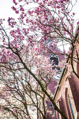 Magnolie vor St. Josef in Straß
