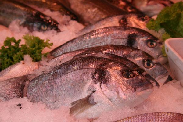 Vielfältiges Frischfischangebot aus aller Welt
