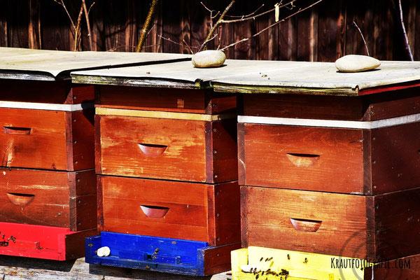 Bienenstock, Naturschutzgebiet, bunt, Biene, Bienen, Naturfotografie, Makrofotografie, krautfotografie.com, krautfotografie, krautblog.com, krautblog, Andrea Blum, Dornbirn, Vorarlberg, Österreich