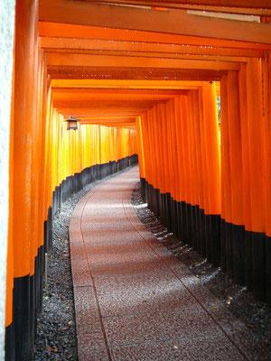 Torii-Weg mit einzelner Laterne: was kommt hinter der Biegung?